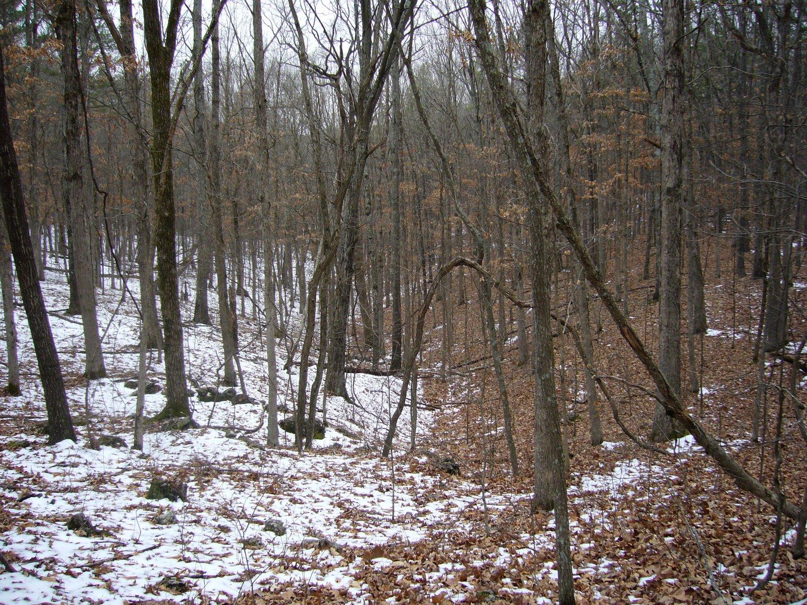 9eddc38ffe Ozark Trail – lower Courtois Section