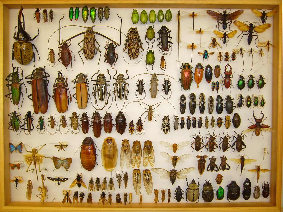 My collection beetles in the bush for The collection com