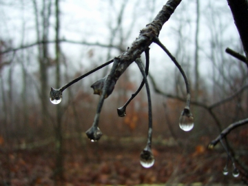 Water drops, Ozark Trail, Trace Creek Section