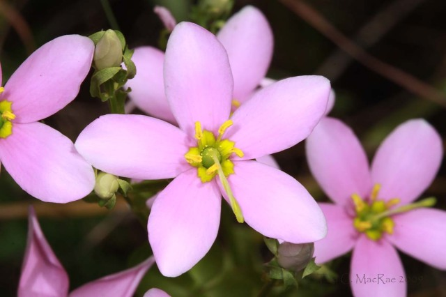 Photo details: Canon 100mm macro lens on Canon EOS 50D, ISO 100, 1/60 sec, f/22, MT-24EX flash 1/4 power w/ diffuser caps.