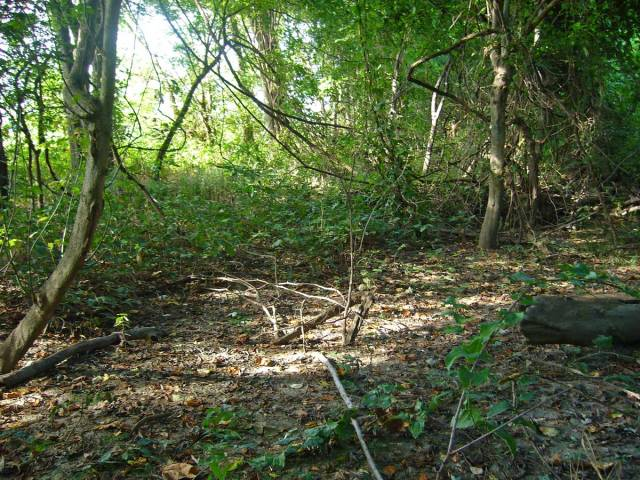 Fig. 3.  Habitat for Cylindera cursitans, along Mississippi River, vic. Donaldson Point Conservation Area, New Madrid Co., Missouri.