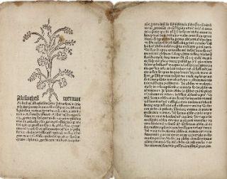 herbarius_latinus