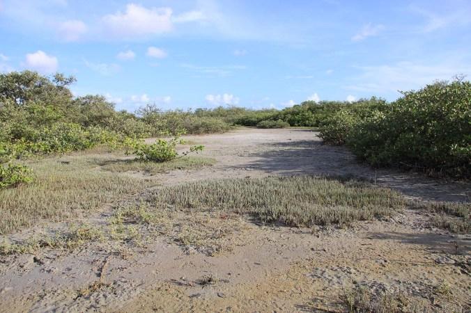 Intertidal salt marsh, Tara Cay Sound Nature Preserve, Seminole, Florida