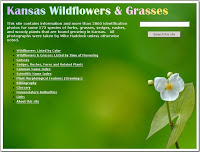 Kansas Wildflowers & Grasses