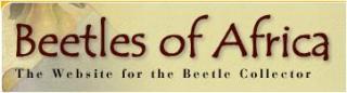 Beetles of Africa