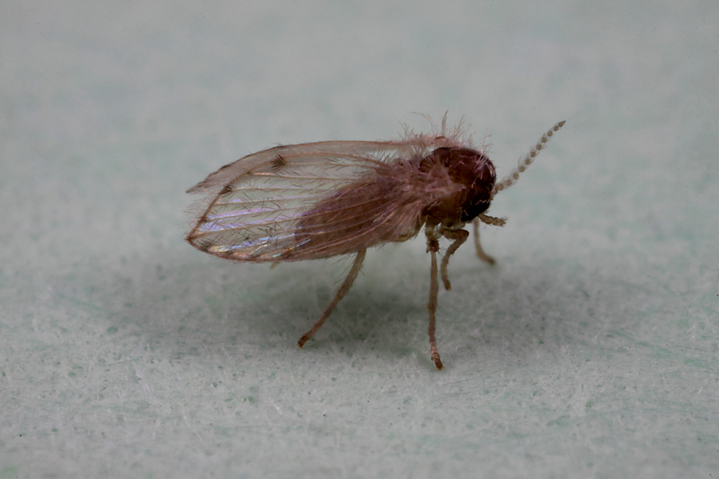 Moth. Itty bitty tiny little flies   Beetles In The Bush