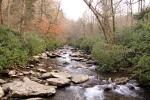Rhododendrons line Alum Creek