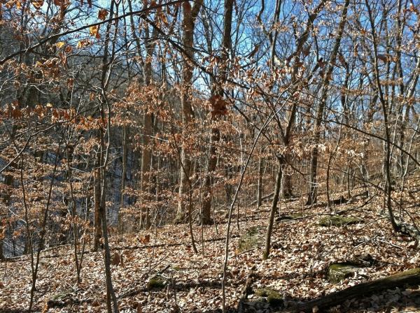 Englemann Woods Natural Area