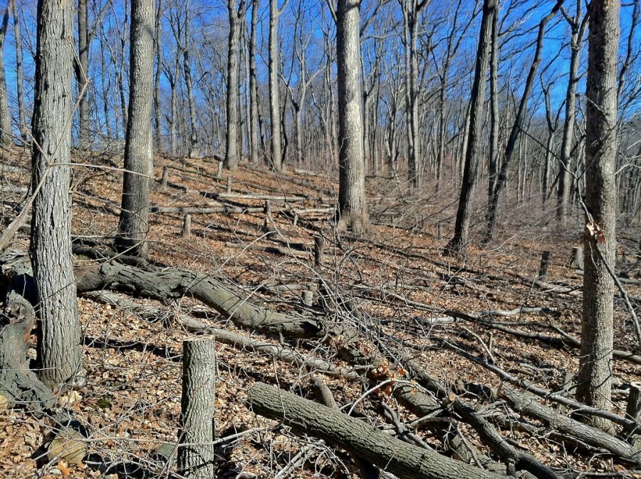 Englemann Woods Natural Area