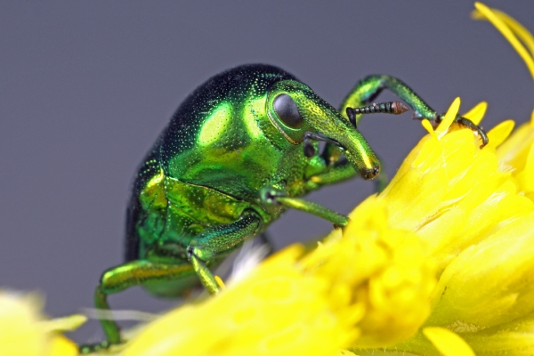 Giving me the weevil eye!