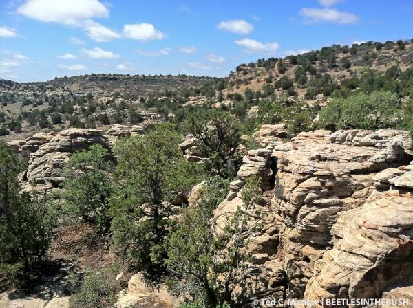 Black Mesa landscape