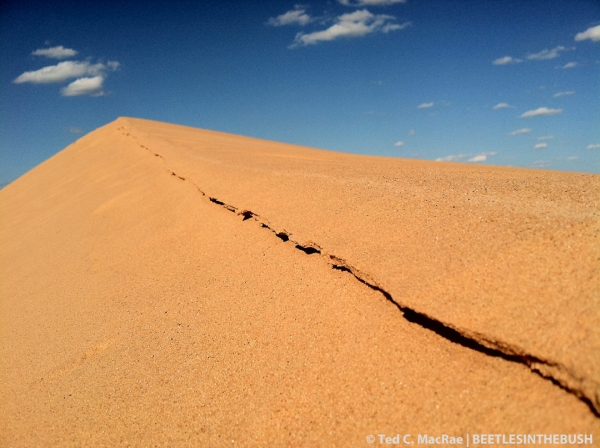 Beaver Dune