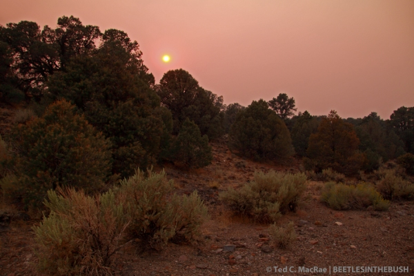 Sunset over Toiyabe National Forest | Lyon Co., Nevada