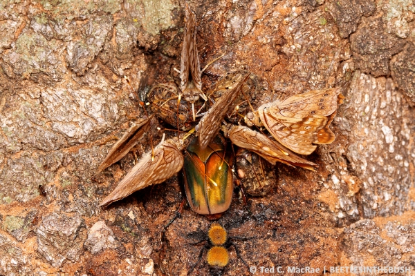 Six insect species representing five families in four orders share a sap flow.