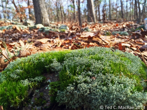 Fruticose lichens and moss intermingle in particularly moist spots.