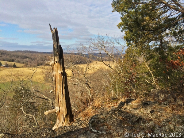 An ancient red-cedar snag hugs the bluff tops overlooking the Huzzah Creek Valley.