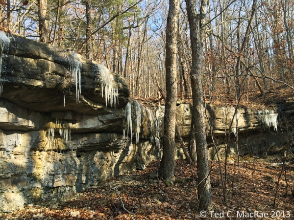 Icicles were especially abundant in this section of the bluff tops.