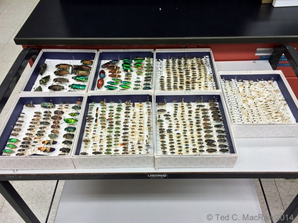 Opened specimen boxes
