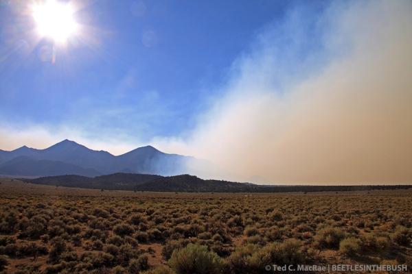 19 mi S of Wellington, Toiyabe National Forest, Nevada.