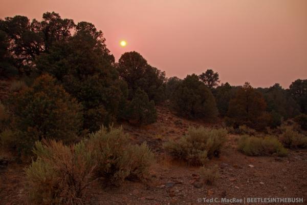 14 mi SE of Wellington, Toiyabe National Forest, Nevada.