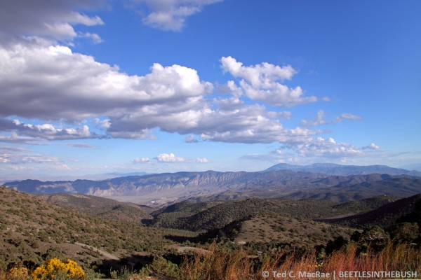 View of Westgard Pass from higher up in the White Mountains near Ancient Bristlecone Pine Forest.