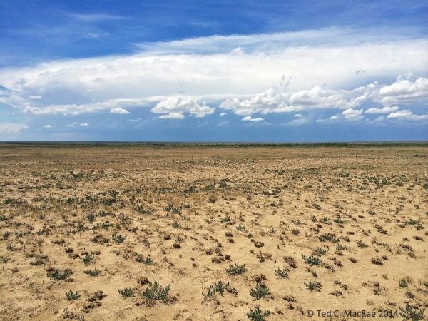 Shortgrass prairie habitat for Prionus integer.