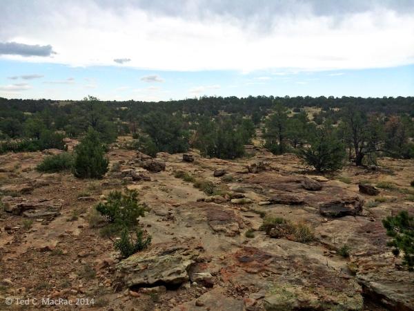 Oak/juniper woodland at Mills Canyon, habitat for Prionus heroicus.