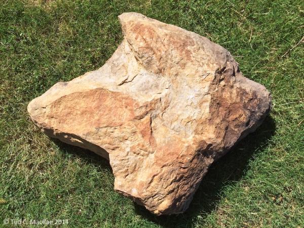 Dinosaur fossil footprint