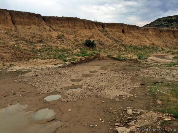 Dinosaur tracks | vic. Black Mesa, Oklahoma.
