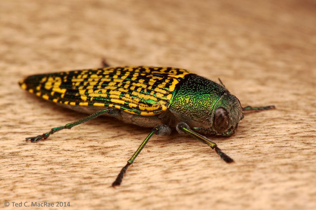 science – Beetles In The Bush
