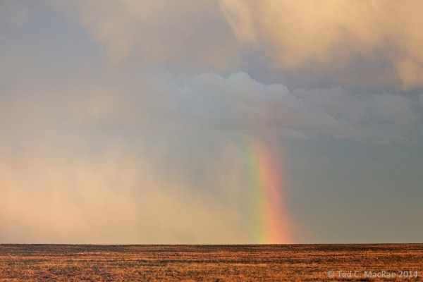 Rainbow over shortgrass prairie