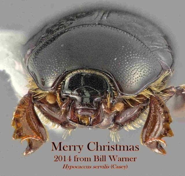 Bill Warner, Phoenix, Arizona, USA