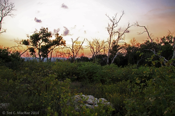 Sunset on the glade