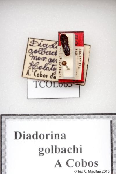 Diadorina golbachi Cobos, 1974 (monotypic)