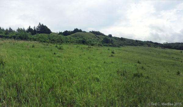 Loess hilltop prairie