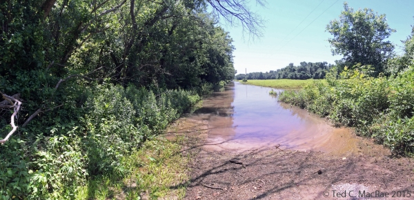 Flooded road leading to saline lick tiger beetle habitat