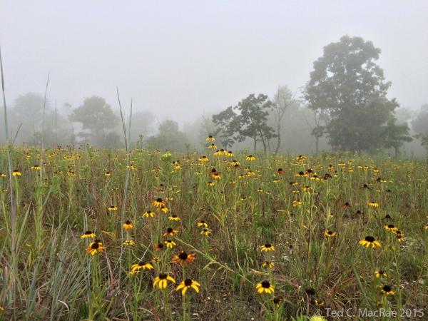 Morning fog over the dolomite glade