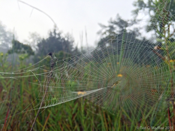 Morning fog on a spider web