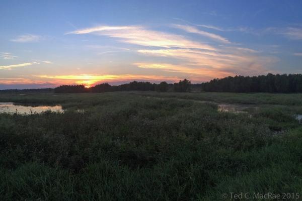 Dusk over Plover Pond