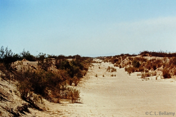 Algodones Dunes