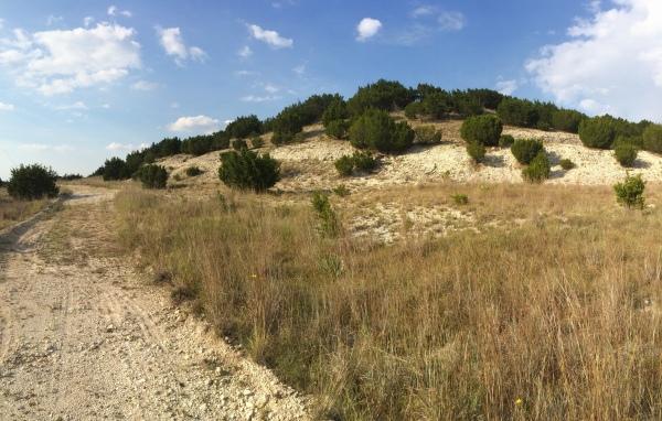 Limestone habitat for Cicindelidia politula