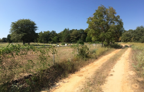 Sandy 2-track habitat for Cicindela scutellaris rugata & C. formosa pigmentosignata