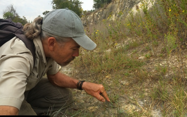 """Stab 'n; grab"" method to collect tiger beetle larvae (Tetracha prob. carolina)"